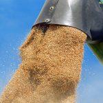 Geteidehandel und Trocknung